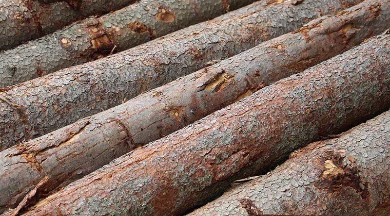 dřevo les