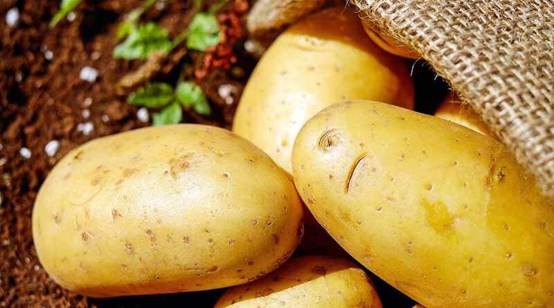 potraviny brambory